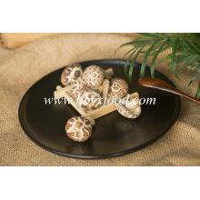 Champignons de fleurs de thé de légumes secs qui poussent en automne