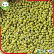 Китай Сушеные органические без ГМО Зеленые бобы Mung