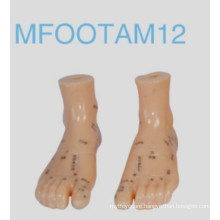 Foot Acunpuncture Model (Foodam12)