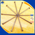 low price common iron nail