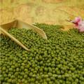 Prime Qualität grüne Mungobohnen Mungobohnen für das Keimen mit konkurrenzfähigem Preis zum Verkauf