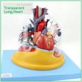 HEART01 (12477) Medizinische Anatomie Transparente menschliche anatomische Lunge mit Herz Modell