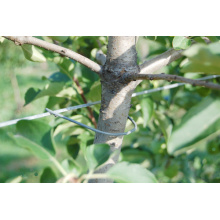 Apple Trees Trellis Clips