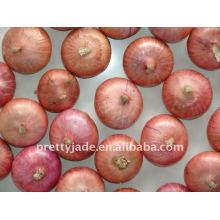 Suministro chino barato Cebolla Roja Fresca