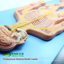 BRAIN19 (12417) Modèle de système nerveux, simulateur humain (modèle médical, modèle anatomique)