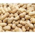 Natural Extracto de Cacahuete 98% Luteolina