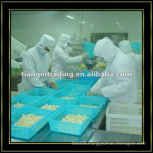 Shandong Peeled Garlic