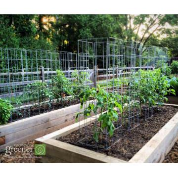 tomato cages organic gardening