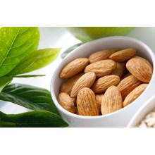 Nouveau prix compétitif pour les cultures des amandes d'abricots amères en Chine