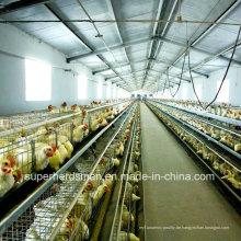 Automatische Geflügelzuchtausrüstung für Broiler und Legehennen