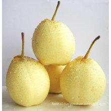 Quality Chinese Ya pears