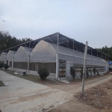 Multi Span PE Agricultural Commercial Greenhouse