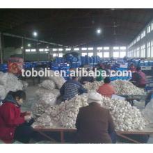 Distribuidor de alho