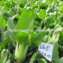 MPK01 Qingeng mediados de alta calidad semillas pakchoi f1 híbrido