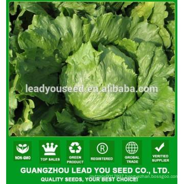 NLT05 Shengcai iceberg lettuce seeds all kinds of vegetable seeds