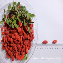 Natural Low Price Free Sample Dried wolfberry