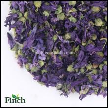 Élégant thé fleur fleur séchée thé violet à vendre