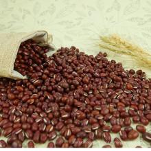 Haricot Adzuki, petit haricot rouge, légumineuses rouges à haricot adzuki