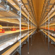 Cages de poulet automatiques pour la maison de poulet
