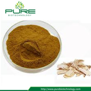 GMP Standard Herbal Angelica Sinensis Extract Powder