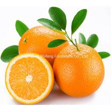 Orange frais navel de qualité chinoise