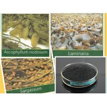 Organic Humic Amino Acid + NPK Compound Fertilizer