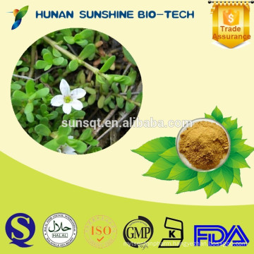 100% Natural Bacopa monnieri extract 50% Bacoside