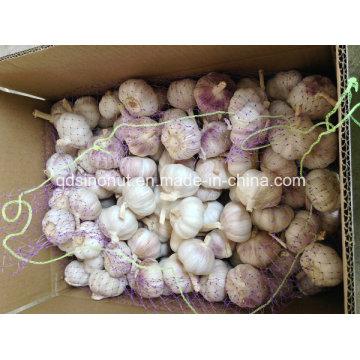 Alho branco roxo 6,5 centímetros China Origem