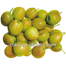 Xinjiang Sweet Fragrant Pear to export