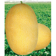 HSM03 Kaolv oval golden yellow F1 hybrid hami melon seeds,honeydew melon