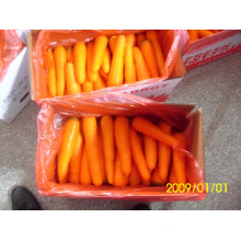 Fresh Chinese Carrots Whoser/Distributor