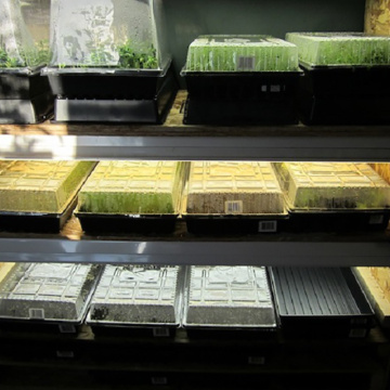 Hydroponic Microgreens Seed Trays with Drain Holes