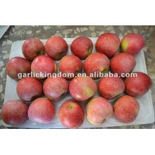 Neue Ernte ungefüllte Qinguan Apfel von Shaanxi