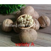 Wholesale Xinjiang Walnut Price Cheap Walnut in Shell