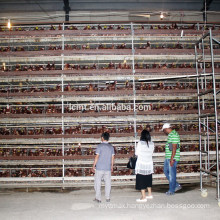 China factory best price automatic chicken cage for sale