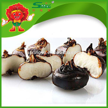 New crop Chinese water chestnut