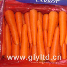 80g-150g New Crop Fresh Carrot