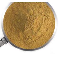Polvo de extracto de hongo de melena de león directo de fábrica