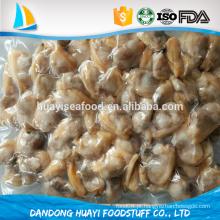 Nova oferta congelado novo molusco curto molusco fornecedor profissional de frutos do mar
