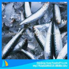 Sardinha congelada cozida sardinha inteira