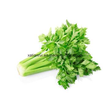 Factory Natural Celery Leaf/Celery Leaves/Apigenin Extract Powder