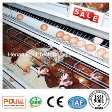 Hot Galvanization Layer Chicken Cage System (A Type)