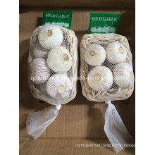 Solo Garlic China 3.0cm 3.5cm