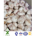 10kgs Carton Packing 6.0cm Normal White Garlic
