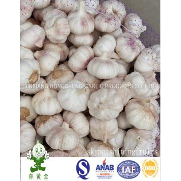 10kgs Carton Packing 6.0cm Normal White Garlic