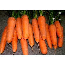 specification of fresh carrots 2011 new crop