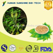 Private Label Huperzia Serrate Extrakt Huperzin A Für Alzheimer-Behandlung