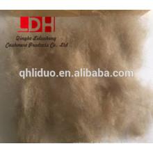 buena calidad de la fibra de cachemira kirguizia para el tipo de fibra de cachemira depilado 17.5mic
