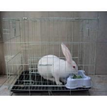 Cheap Rabbit Farming Cage