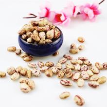 Neue Kulturen Xinjiang Runde Typ Licht gesprenkelten Kidneybohnen Cranberries Bohnen trocken von China